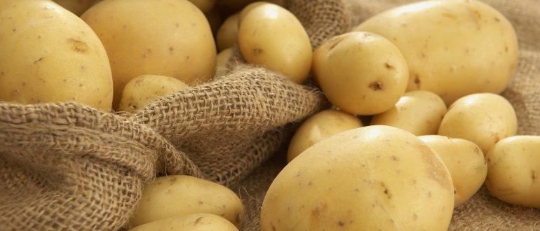 Почему на картошке бородавки