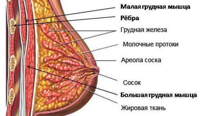 foto-raznovidnosti-soskov-i-oreolov-seks-na-plyazhah-podborka-onlayn