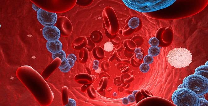 Вирус в крови