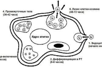 Механизм внедрения инфекции