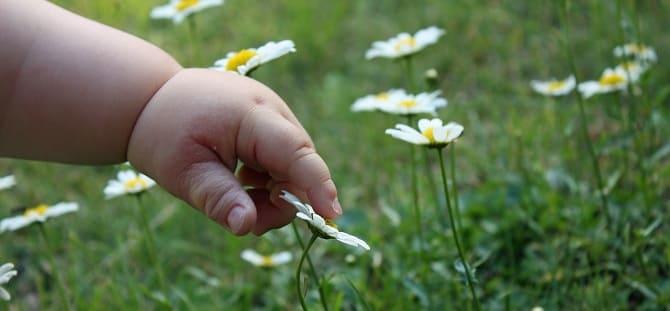 Ребенок трогает цветок