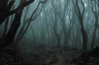 Лес самоубийй в Японии