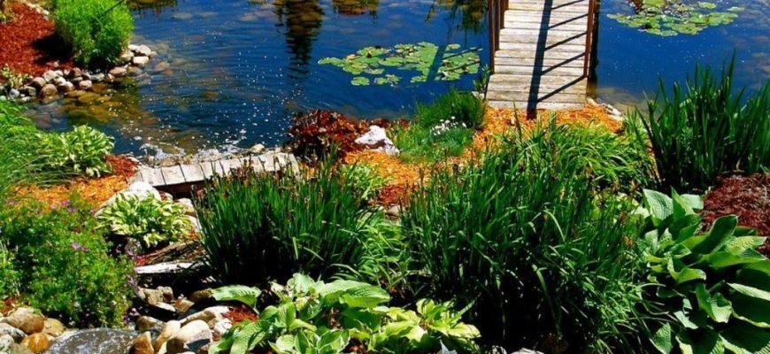 Растения у водоема