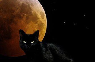 Полная луна и черный кот