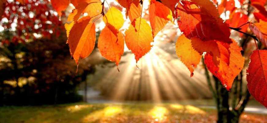 Лучи солнца пробиваются сквозь листву