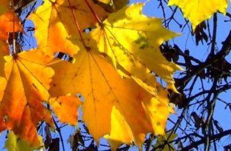 Желтые листья на фоне синего неба