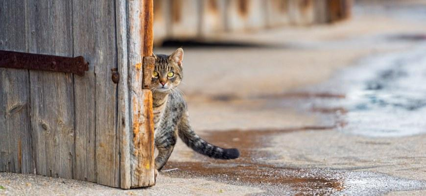 К чему пришла трехцветная кошка