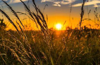 Закат и луговая трава