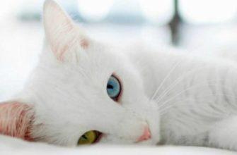 Кошка лежит в постели