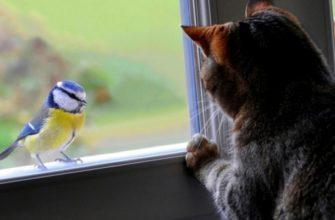 Кот охотится за птичкой