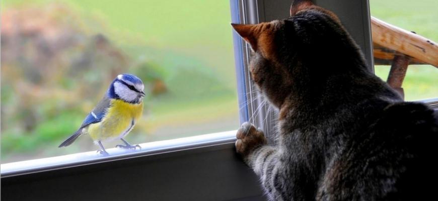 Народные приметы залетели синицы в окно