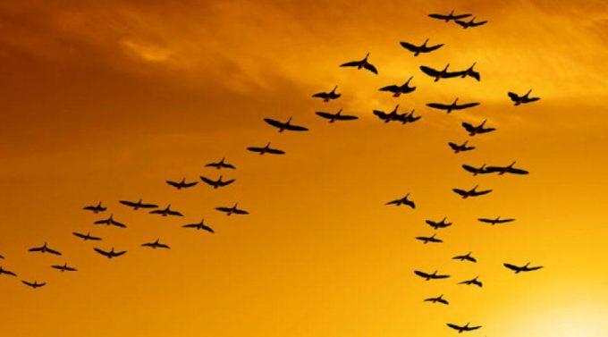 Птицы летят ключом