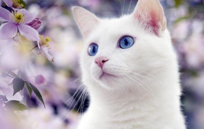 Кот смотрит в даль