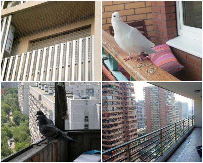 Защита от птиц на балконе