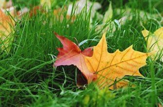 Опавшие листья в траве
