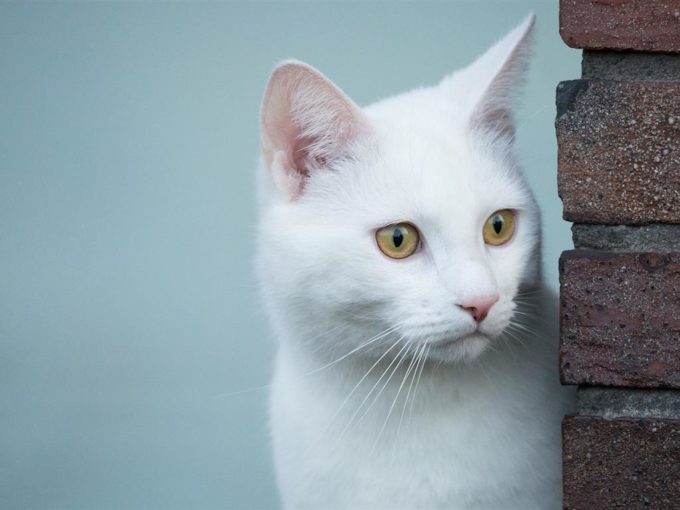 Котенок смотрит из-за угла дома
