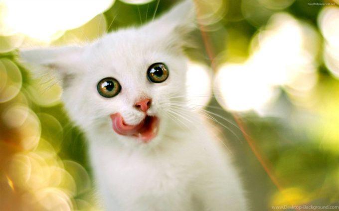 Котенок облизывается
