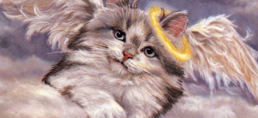 Почему кошки уходят из дома умирать мнение учных и приметы