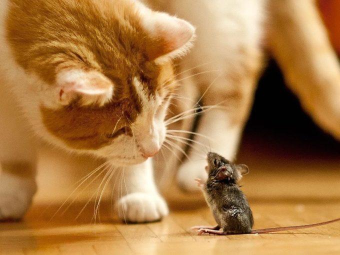 Мышь и кот смешные картинки, наталье