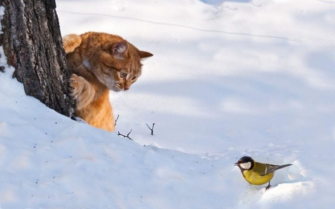 Кот охотится на птицу