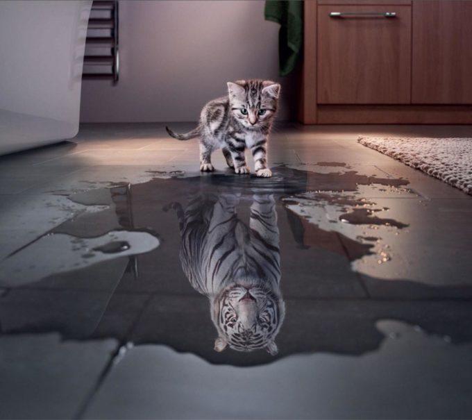 Котенок видит в отражение льва