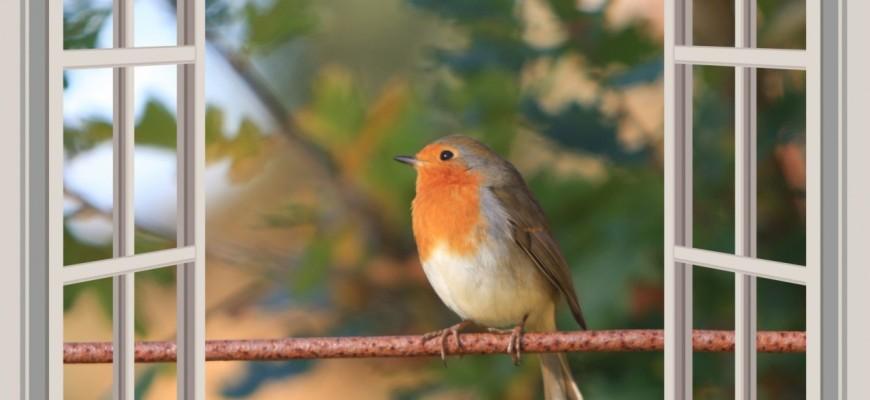 Птица и открытое окно