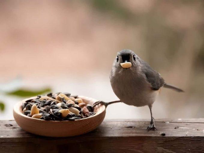 Птичка кушает