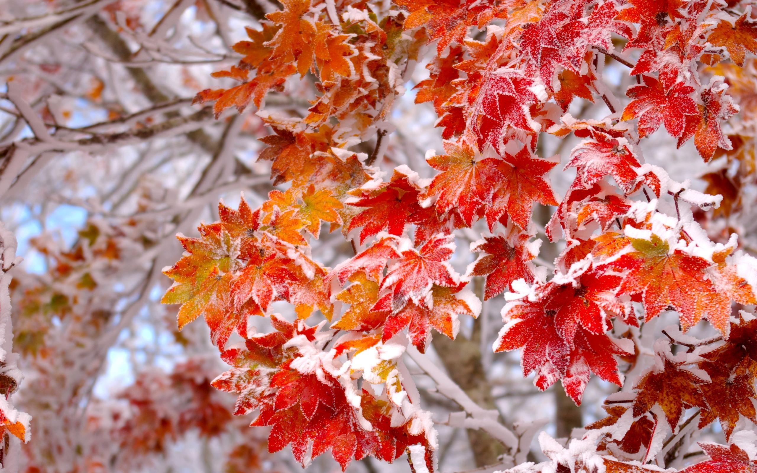 лучших ноябрь картинки для стола нашей местности редко