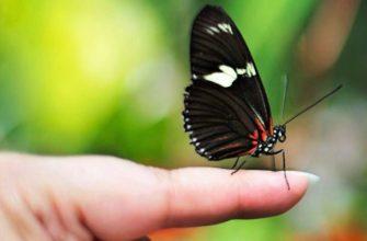 Бабочка на пальце