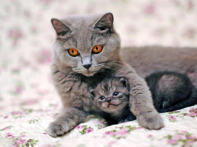 Кошка с котенком