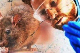 Ученый и крыса