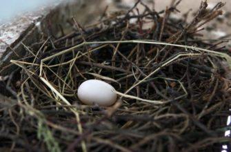 Гнездо с яйцом